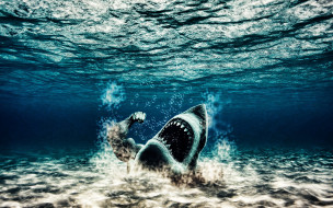 рука, море, акула