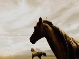 лошади, туман, горы