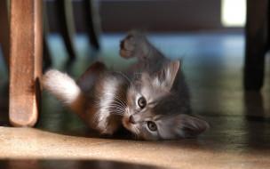 котенок, серый, пол
