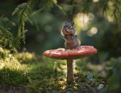 зверюшка, грызун, боке, бурундук, мухомор, мох, гриб, ветки, лес