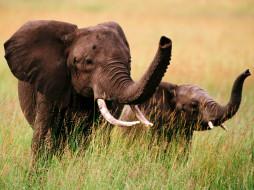 трава, слоненок, слониха