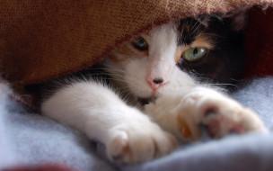 ткань, лапы, кот