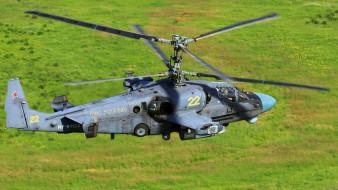 ударные вертолеты ввс, вертолеты, аллигатор, ка-52, авиация, россия