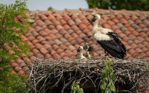 Гнездо, аисты