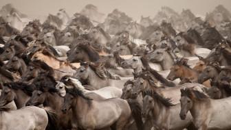 табун, лошади, перегон