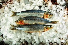 еда, рыба