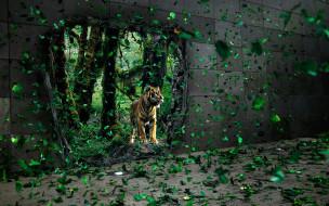 джунгли, тигр, стена, дыра, листья