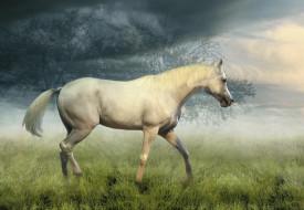 туман, лошадь, трава