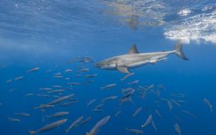 акула, море, рыбы