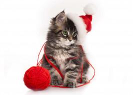 животные, коты, клубок, шапка, котенок