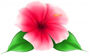 лепестки, цветок, фон