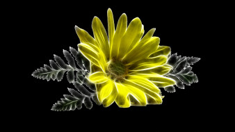 фон, лепестки, цветок