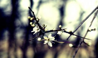 ветка, цветение
