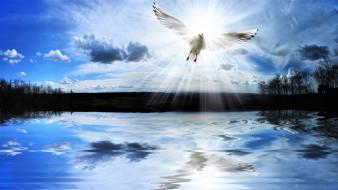 чайка, птица, озеро, небо, облака, свет