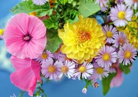 цветы, разные вместе, лаватера, георгин