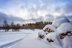 природа, зима, лес, деревья
