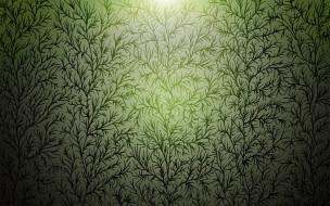 растения, свет