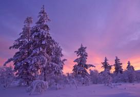 снег, закат, деревья