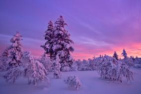 деревья, закат, снег