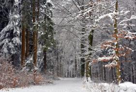 обои для рабочего стола 2048x1387 природа, зима, простор