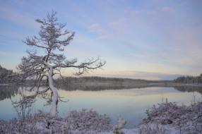 иней, снег, дерево