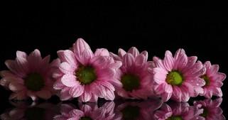 капли, розовый