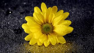 капли, желтый