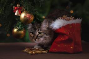 украшения, ёлка, кот, мешок