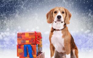 коробки, снег, подарки, пес, собака