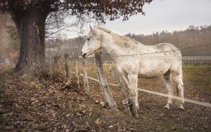 природа, конь, забор