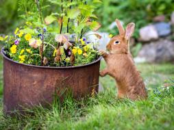 кролик, трава, коричневый