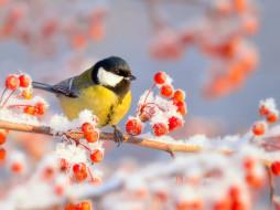 ягоды, птичка