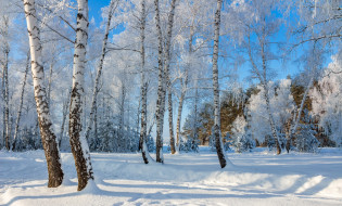 обои для рабочего стола 1920x1161 природа, зима, снег, берёзы