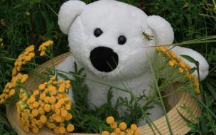 медведь, плюшевый
