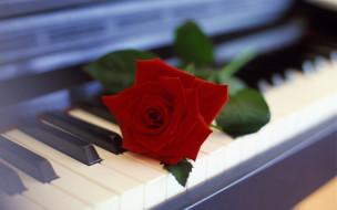 цветок, пианино, клавиши