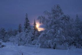 снег, зима, деревья, пейзаж, утро, рассвет, солнце