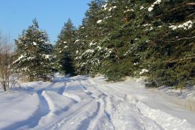 лес, природа, снег, тени