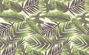 белый фон, листья, текстура