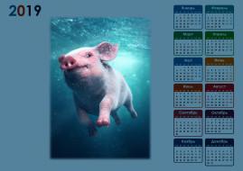 свинья, вода, поросенок
