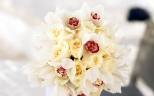 орхидеи, розы
