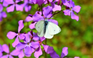 цветок, бабочка, белая