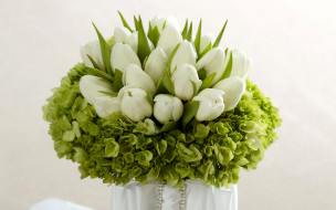 тюльпаны, гортензия