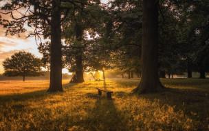 природа, лес, скамейка, закат, роща, деревья