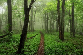 природа, лес, тропинка