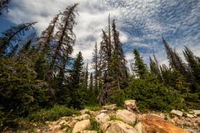 природа, лес, простор
