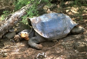 животные, Черепахи, черепаха, коряга