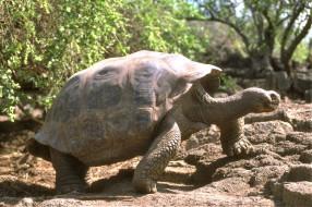 животные, Черепахи, черепаха, камни, кусты