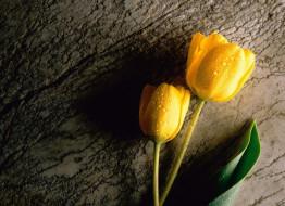 желтые, капли, тюльпаны
