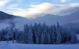 природа, лес, китай, горы, туман, снег, деревья, зима, канас