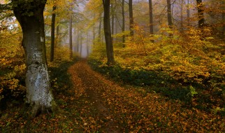 обои для рабочего стола 2048x1212 природа, дороги, осень, лес
